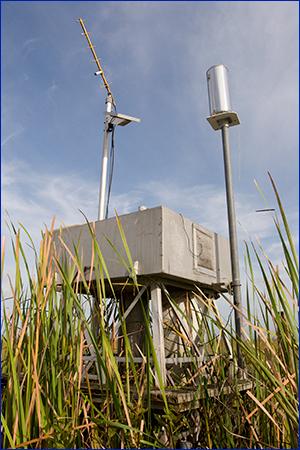 Rainfall monitor in field; photo by Tyler Jones, UF/IFAS