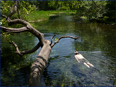 A snorkler submerged in Florida river; photo by Tyler Jones, UF/IFAS